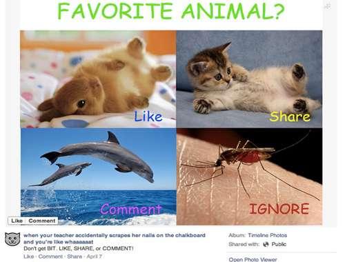 tang-like-facebook1