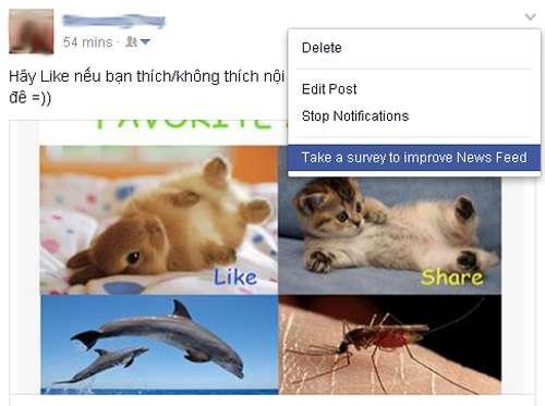 tang-like-facebook2